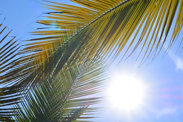 Foglia di cocco verde con sfondo di cielo