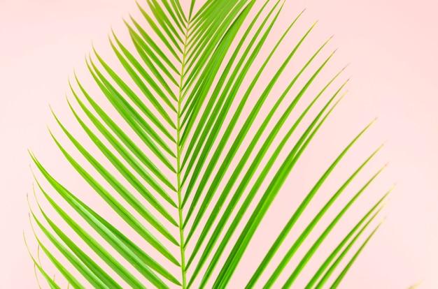 Foglia di disposizione piana del primo piano del ramo di palma su fondo rosa