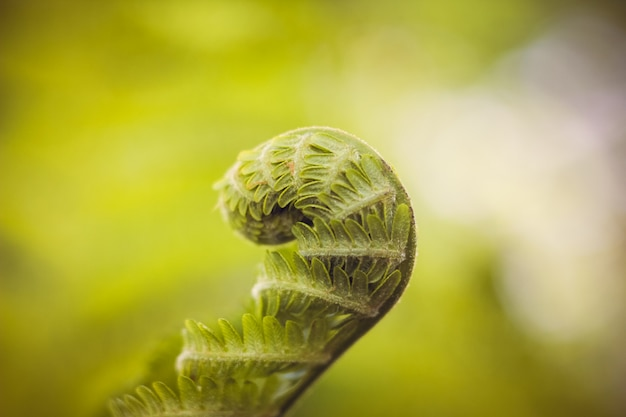 Foglia di felce foglia di una pianta verde