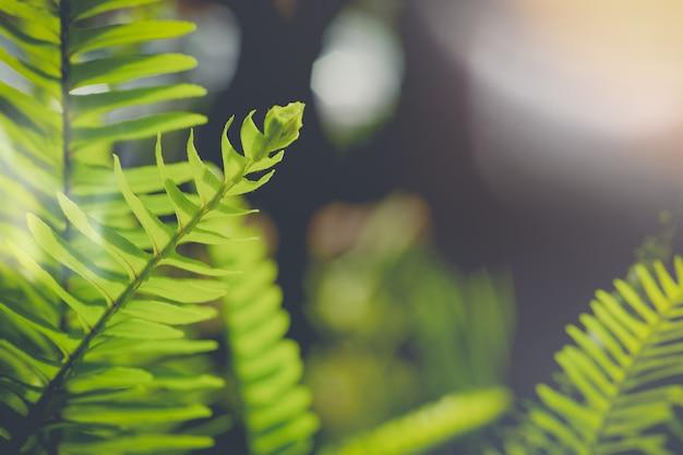 Foglia di felce gambo sfondo verde fogliame primaverile