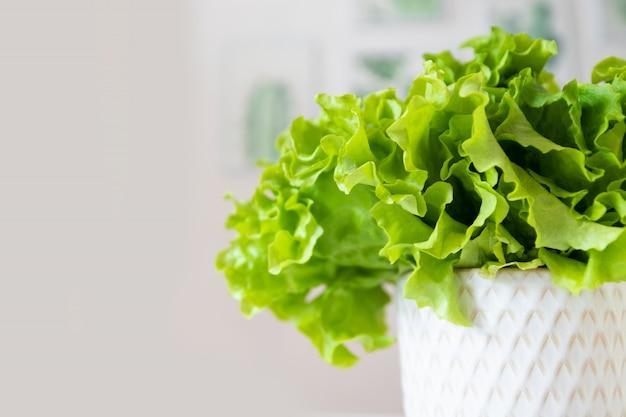 Foglia di insalata lattuga in una tazza isolata su priorità bassa gialla.