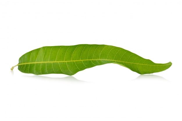 Foglia di mango su uno sfondo bianco
