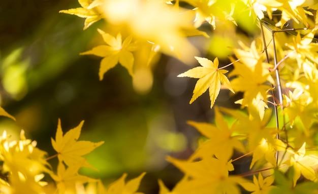Foglia di momiji dell'acero di autunno nella priorità bassa del cielo blu