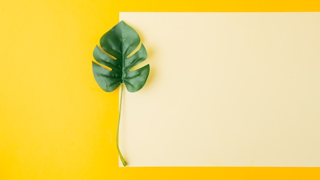 Foglia di monstera vicino alla carta bianca su sfondo giallo