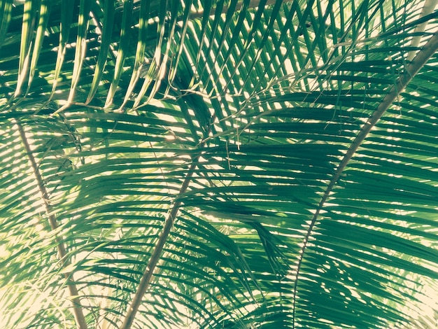 Foglia di palma con luce naturale proveniente dal raggio del sole