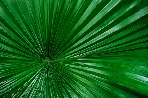 Foglia di palma con sfondo sfocato