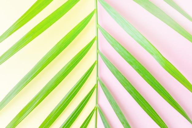 Foglia di palma del primo piano su giallo pastello e su rosa.