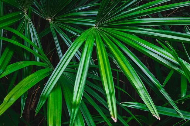 Foglia di palma nella foresta