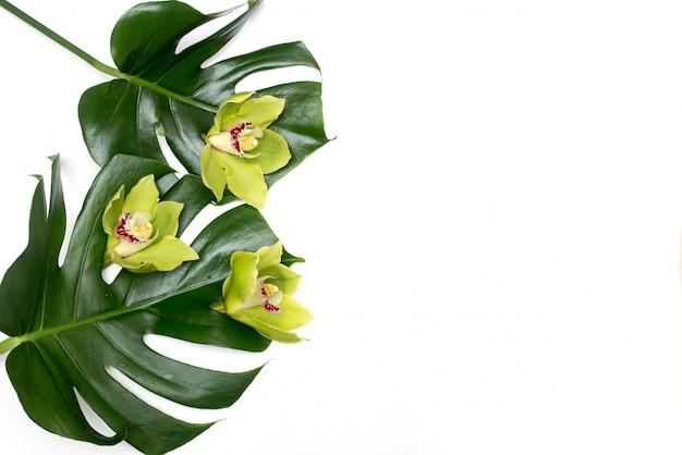 Foglia di palma tropicale di monstera su una priorità bassa bianca con l'orchidea verde