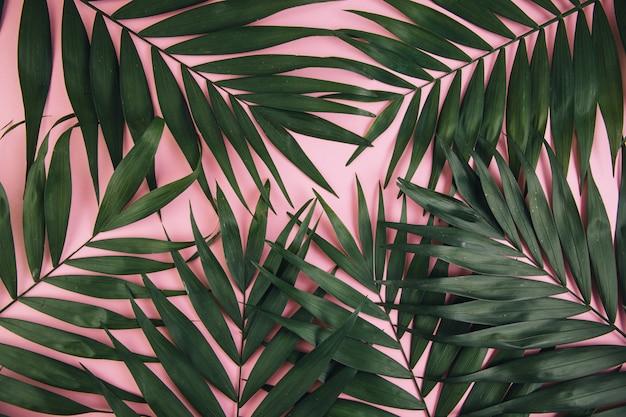 Foglia di palma tropicale su sfondo rosa. concetto di estate