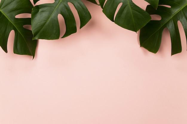 Foglia di palma tropicale su sfondo rosa