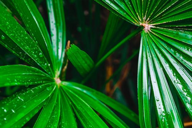 Foglia di palma verde