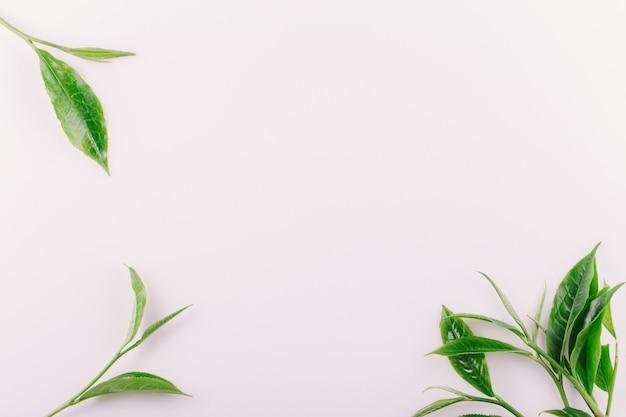 Foglia di tè verde d'annata isolata su bianco