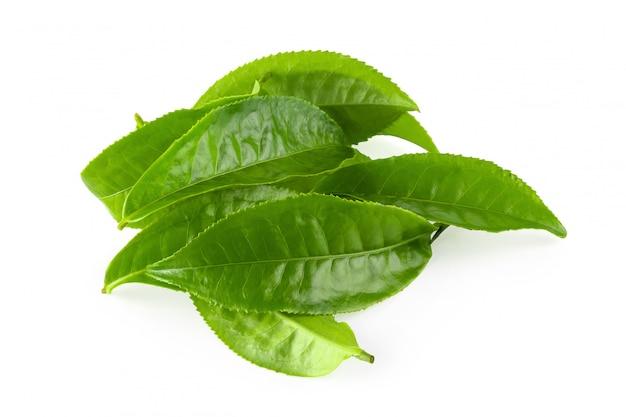 Foglia di tè verde isolata sopra fondo bianco