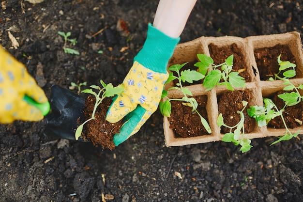 Foglia di torba occupazione agricola botanico