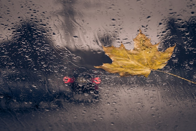Foglia gialla caduta e gocce di pioggia