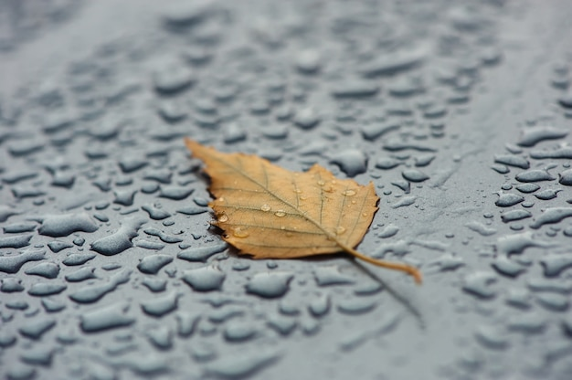 Foglia gialla su una superficie bagnata.