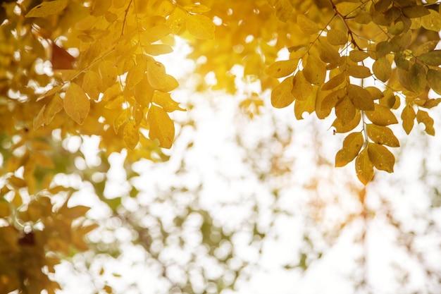 Foglia gialla sull'albero nella stagione di autunno per la natura