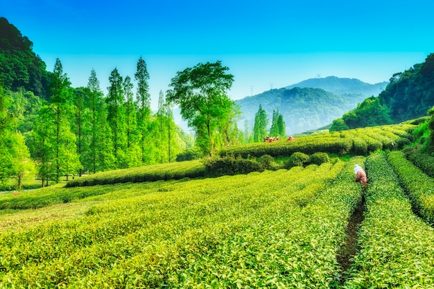 Foglia industria terra biologico femminile