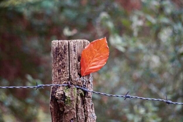 Foglia marrone dell'albero nella stagione autunnale, colori autunnali