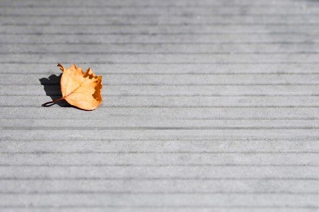 Foglia secca sul fondo grigio del pavimento di calcestruzzo nel giorno soleggiato di autunno
