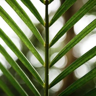 Foglia tropicale del primo piano con fondo vago