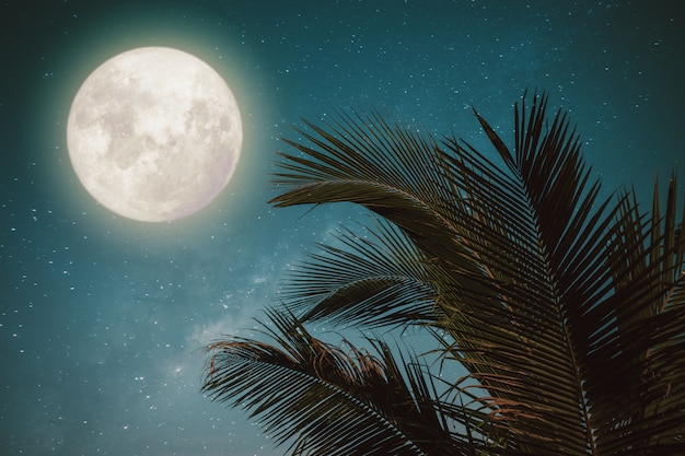Foglia tropicale della bella palma tropicale di fantasia con la stella della via lattea della luna piena meravigliosa in cieli notturni, stile d'annata di tono di colore.