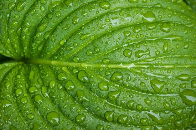 Foglia verde con gocce di rugiada dopo la pioggia