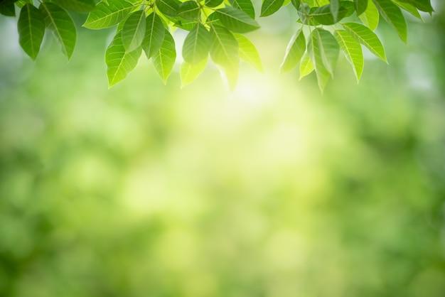 Foglia verde con lo spazio della copia usando come natura della carta da parati o del fondo.