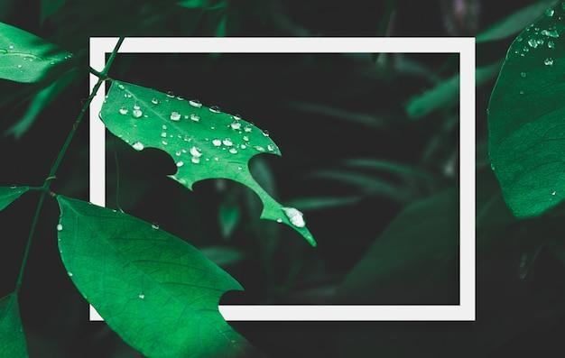 Foglia verde con rugiada e cornice bianca su sfondo scuro della natura.