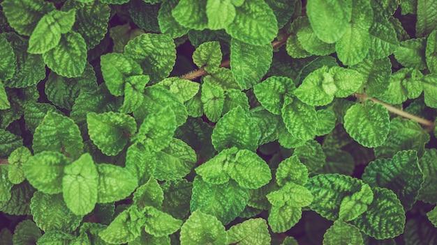 Foglia verde crescente