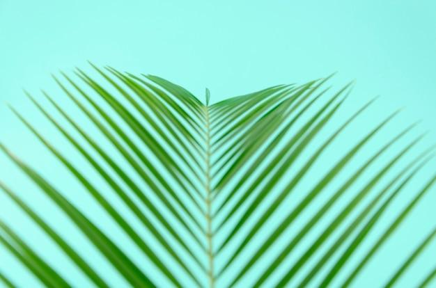Foglia verde del primo piano unfocused di vista superiore della palma sul fondo della menta