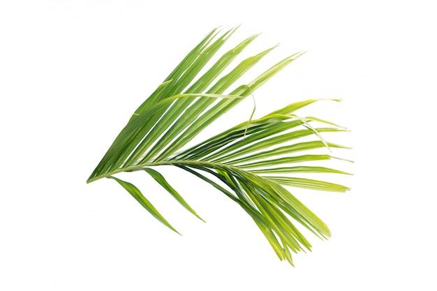Foglia verde della palma isolata su fondo bianco