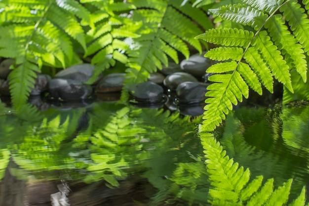 Foglia verde della pianta con felce e ciottoli sull'acqua