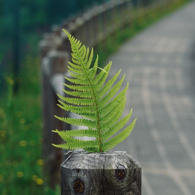 Foglia verde della pianta della felce strutturata nella natura