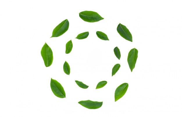Foglia verde di disposizione piana isolata su bianco