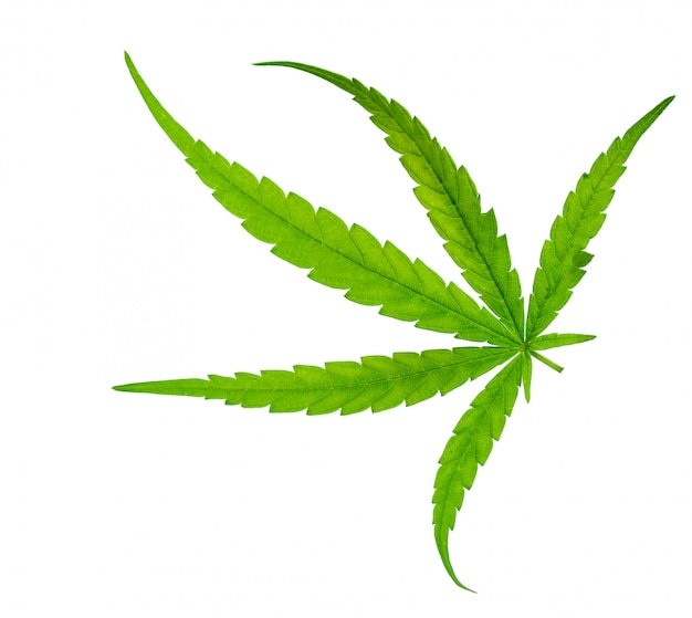 Foglia verde di marijuana