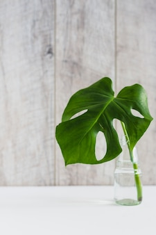 Foglia verde di monstera in vaso di vetro sullo scrittorio bianco contro il contesto di legno