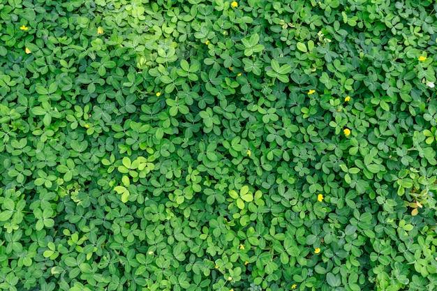 Foglia verde in sfondo texture verde scuro