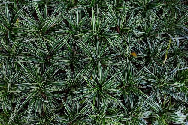 Foglia verde in verde scuro sulla trama, modello astratto sfondo natura
