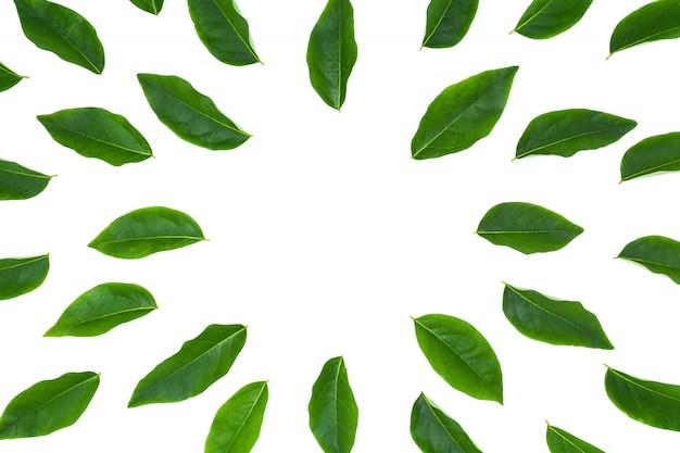 Foglia verde laica piana isolata su fondo bianco per il contesto creativo della natura