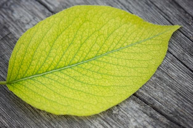 Foglia verde macro, su uno sfondo in legno