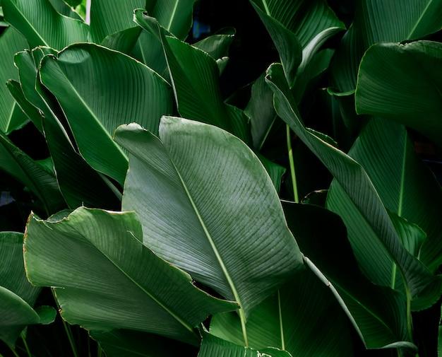 Foglia verde scuro texture di sfondo