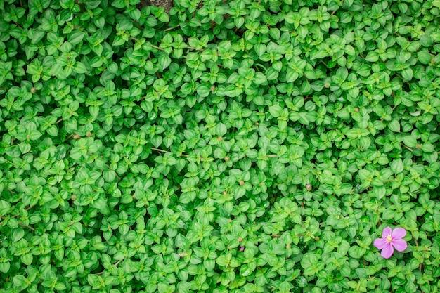 Foglia verde sullo sfondo naturale.