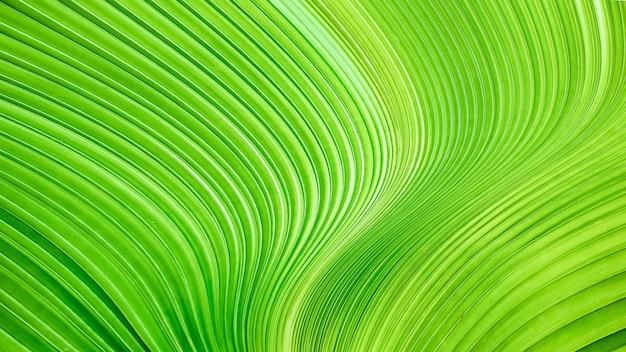 Foglia verde verdeggiante, liscio e torsione linee di fondo. texture di lusso astratta.