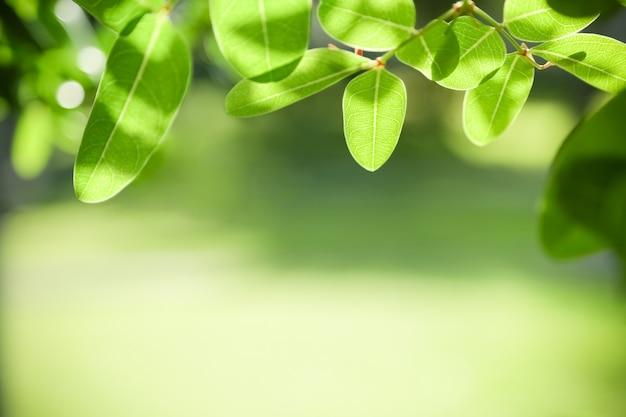Foglia verde vista natura su sfondo sfocato verde sotto la luce del sole con bokeh