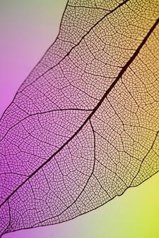 Foglia viola e gialla trasparente astratta