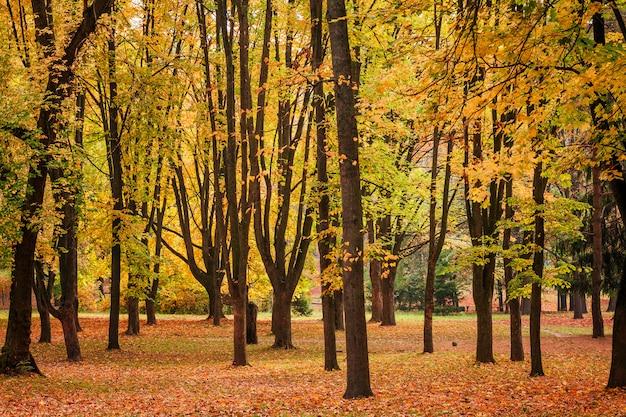 Fogliame colorato nel parco d'autunno