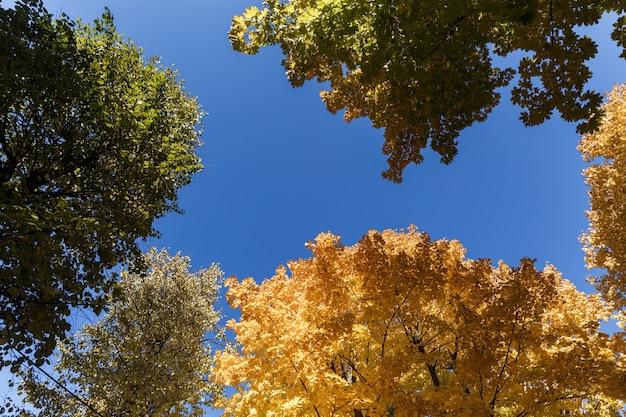 Fogliame colorato nel parco in autunno / sfondo cielo con foglie d'autunno / foglie di alberi d'autunno in colore vintage