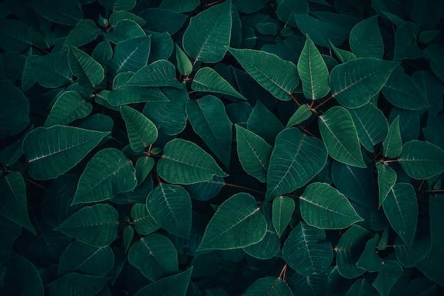 Fogliame della foglia tropicale nella struttura verde scuro